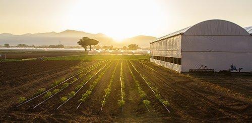 import-fruttitalia-caat-torino---centro-agro-alimentare-torino